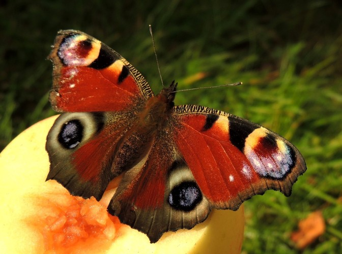 Rescue Madam Butterfly