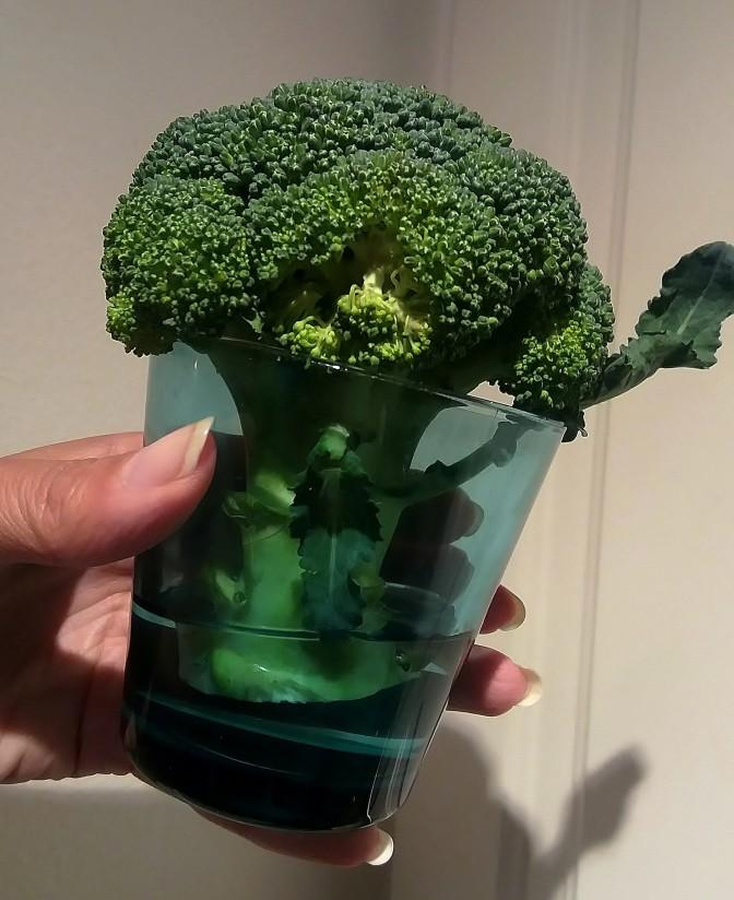 Nuupahtiko reipas parsakaalisi?